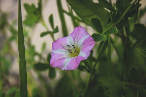 Ingyenes stockfotó gyönyörű virágok, harangvirág, kék virágok, művirágok témában