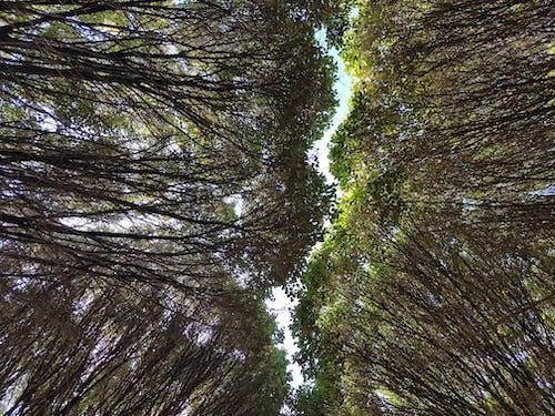 公園, 山, 樹 的 免费素材照片