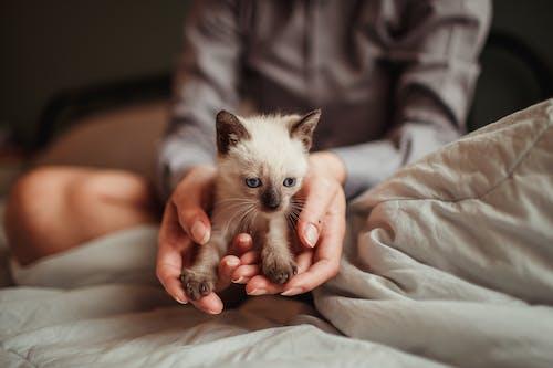 Evcil Hayvan, hayvan, kedi içeren Ücretsiz stok fotoğraf