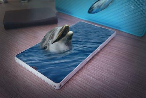Бесплатное стоковое фото с дельфин, рыба, смешать фото, телефон
