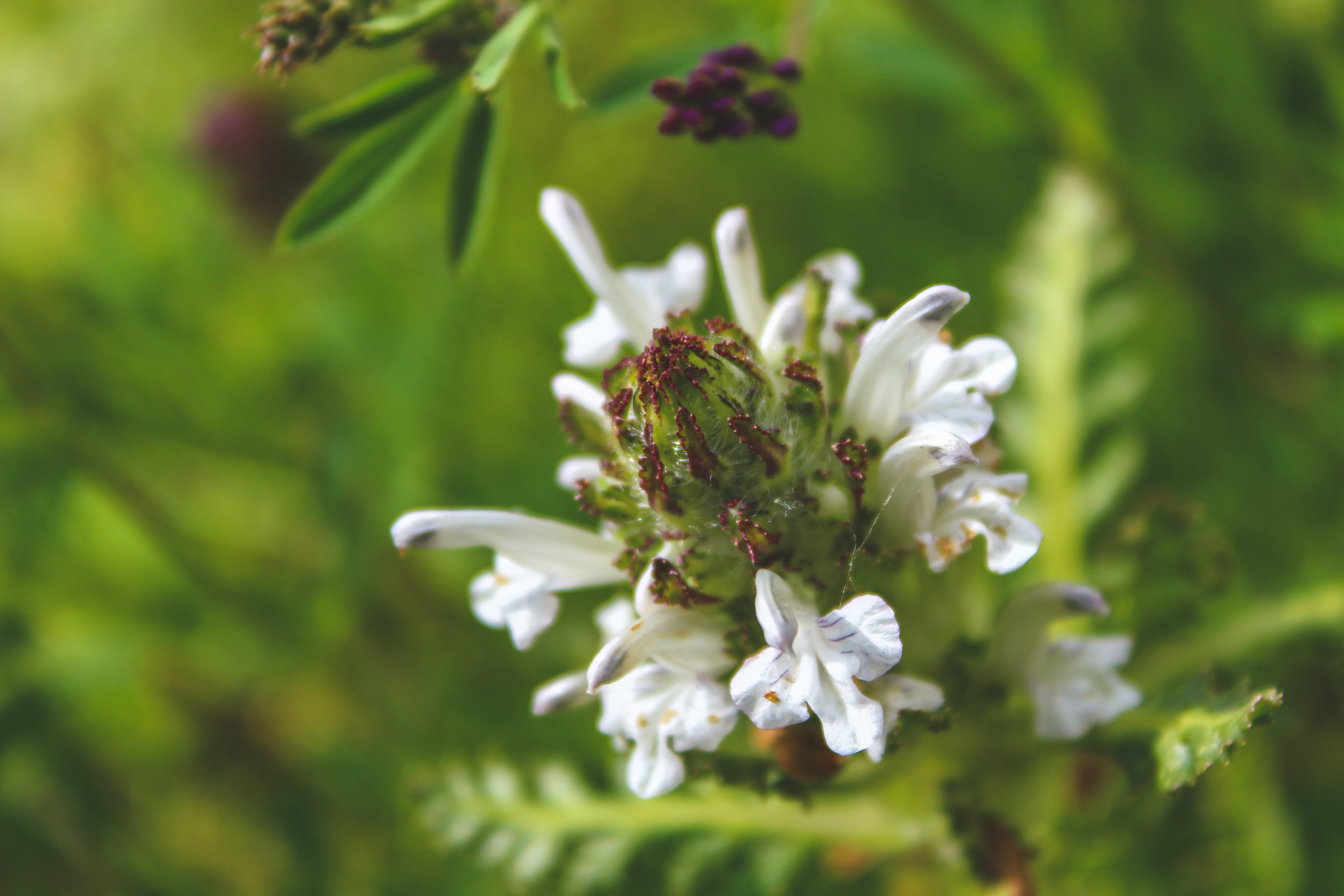 Focus Photography of White Flowers