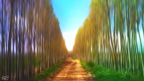 Бесплатное стоковое фото с движение, деревья, размытый, сад