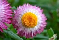 nature, flower, theme symmetry