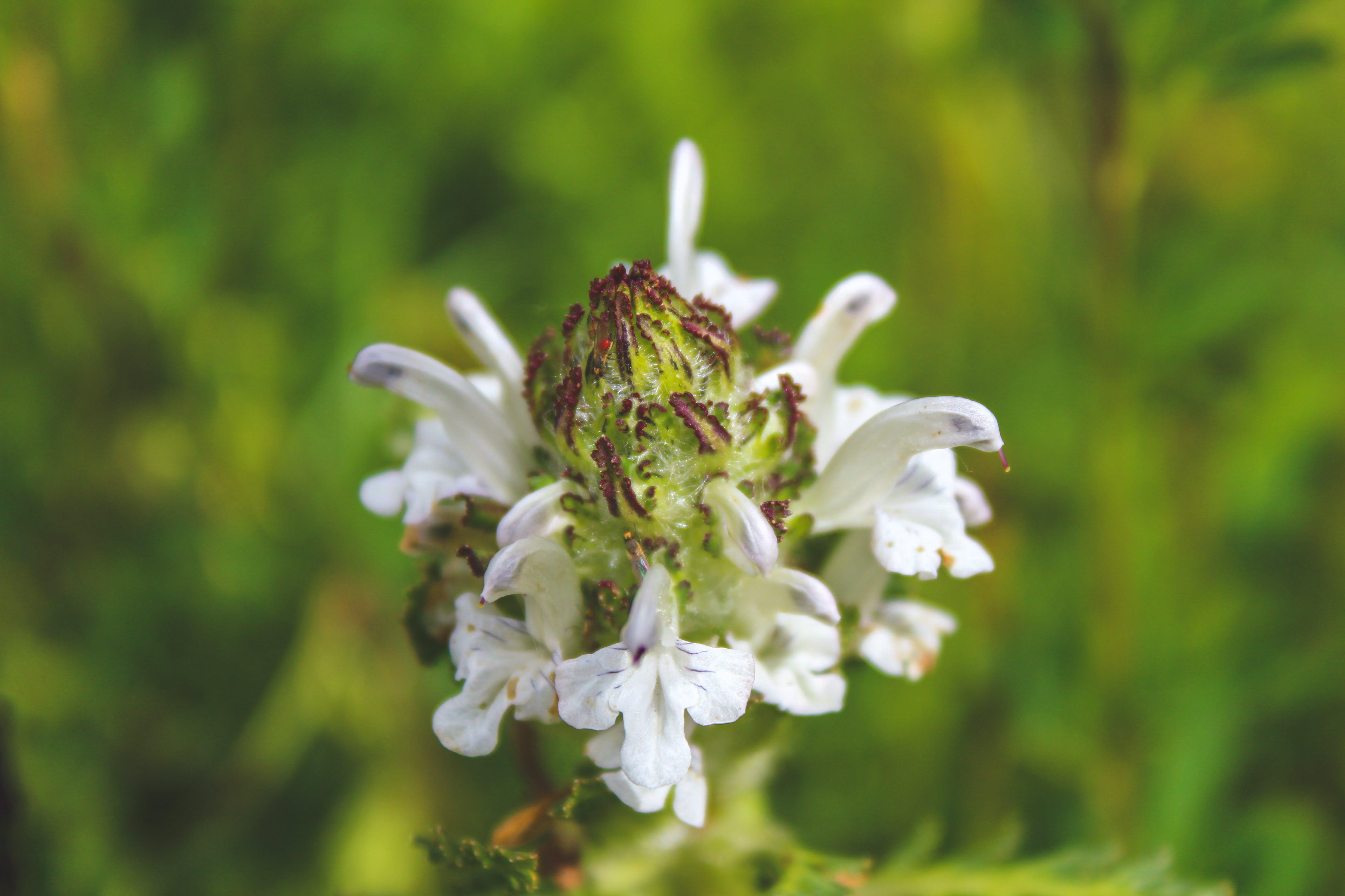 Kostenloses Stock Foto zu blühende pflanze, blume, blumen, feld der blumen