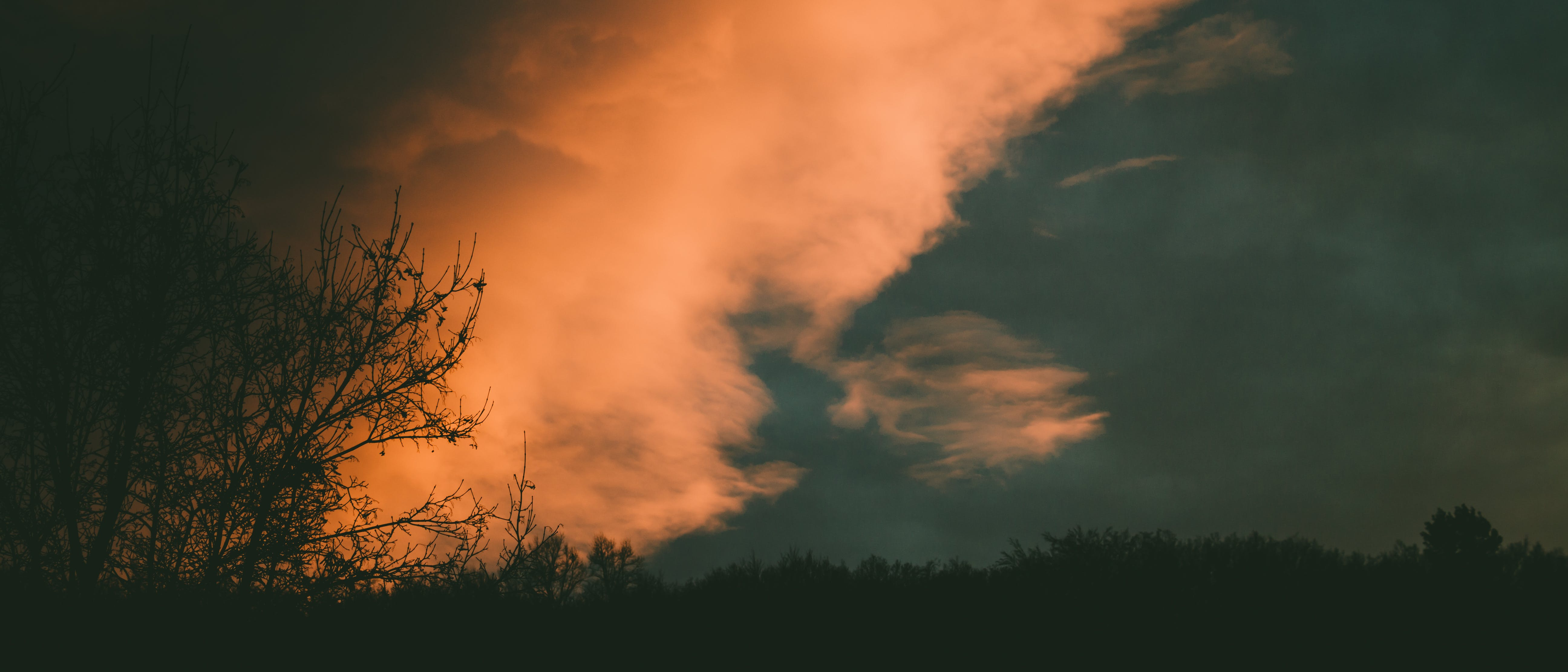 Gratis stockfoto met achtergrondlicht, avond, bomen, donker