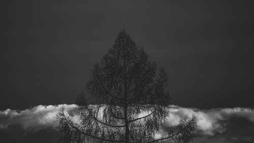 剪影, 夜間攝影, 天性, 天空 的 免费素材照片