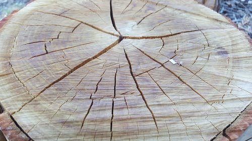Free stock photo of chopped, cut, logs, tree stump