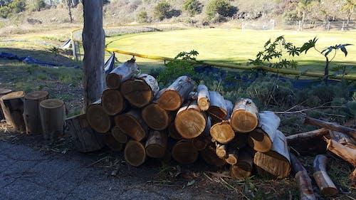 Free stock photo of chopped, cut, logs