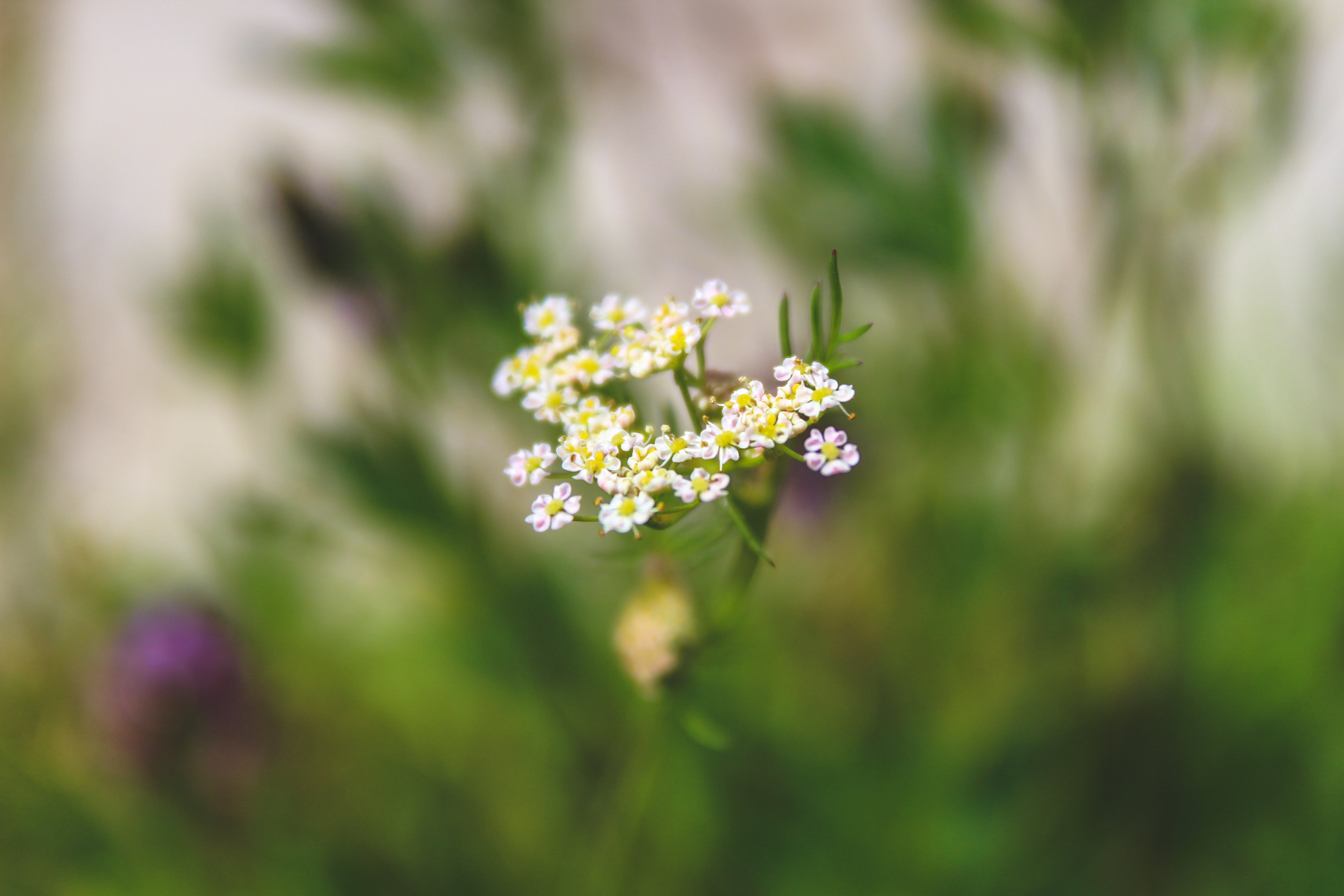 Shallow Focus Photography of White-and-yellow Flowers
