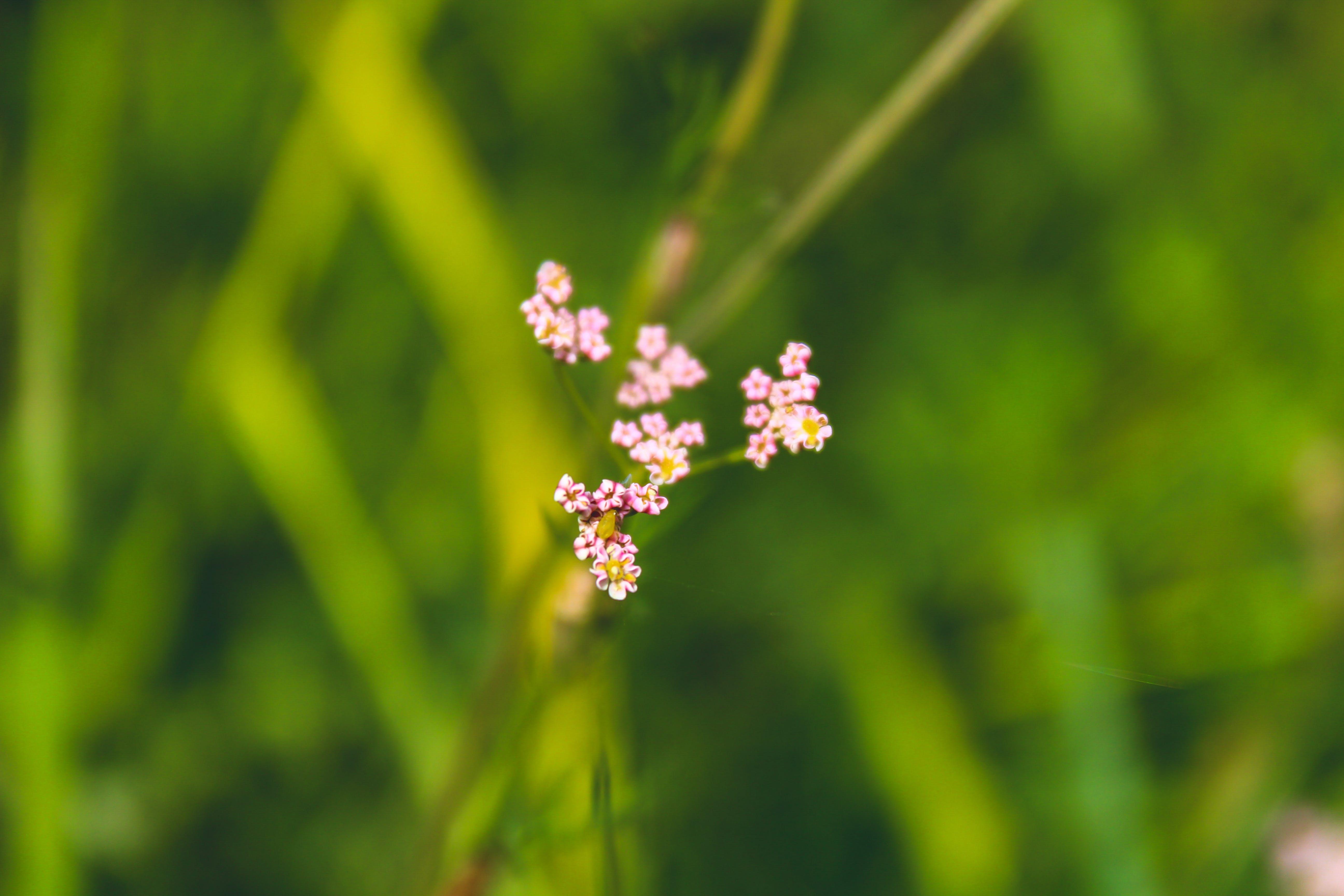 Kostenloses Stock Foto zu blauen blüten, blume, künstliche blumen, pinke blume