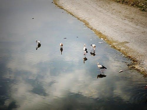 Бесплатное стоковое фото с аист, вода, небо, рефлекс