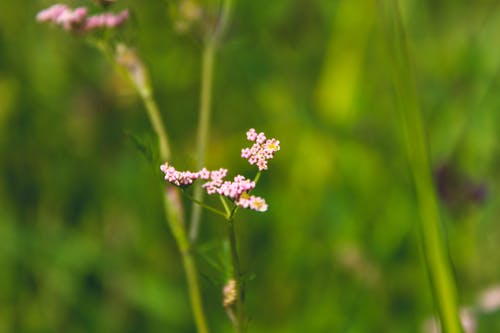Immagine gratuita di bocciolo, colori, crescita, fiori