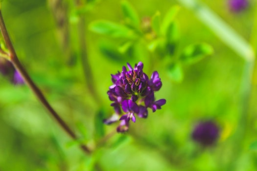 Close-Up Photography of Violet Flowers