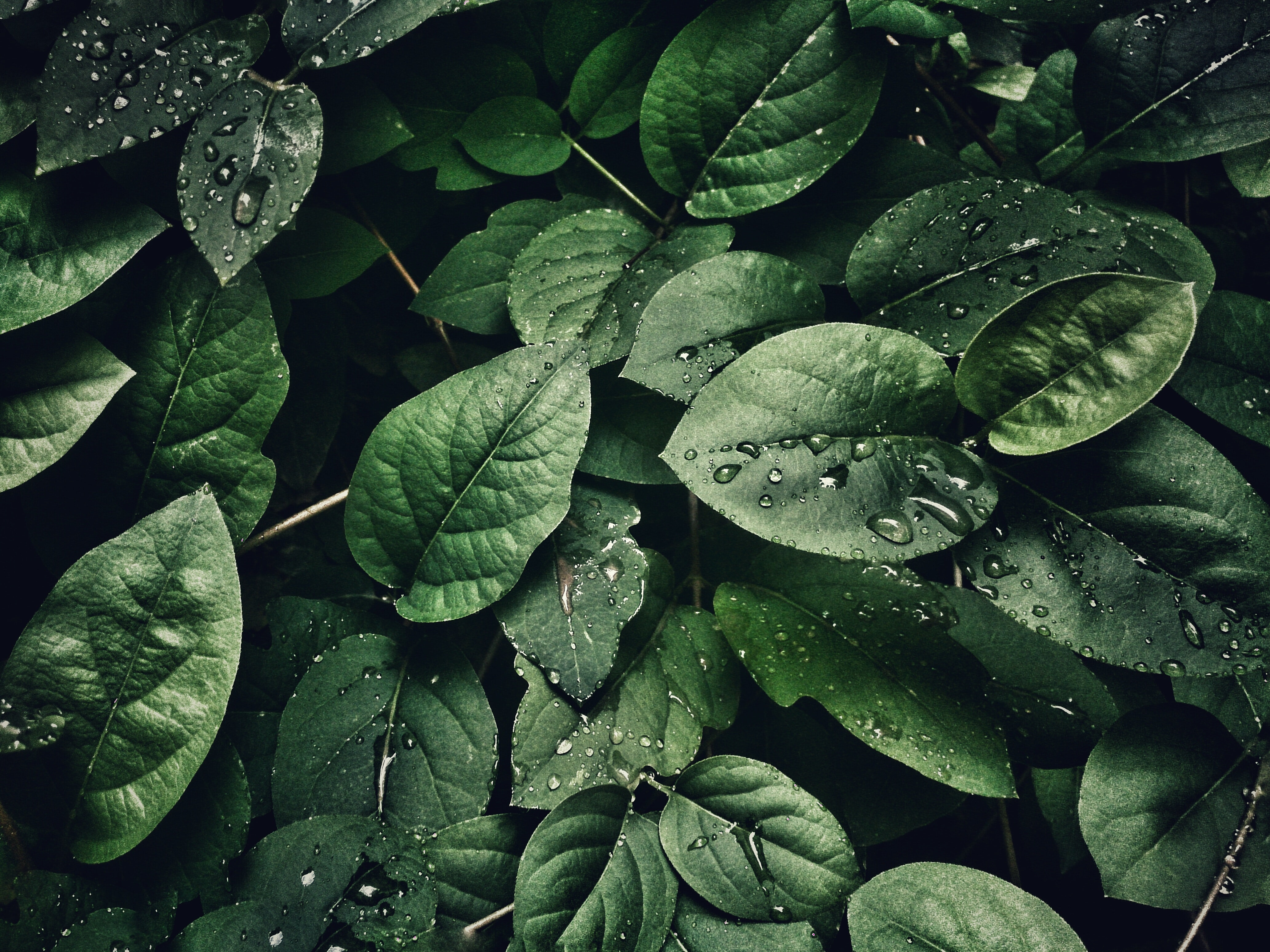 Green Leafs Is Element To Wrapping D Object Natural Is Many