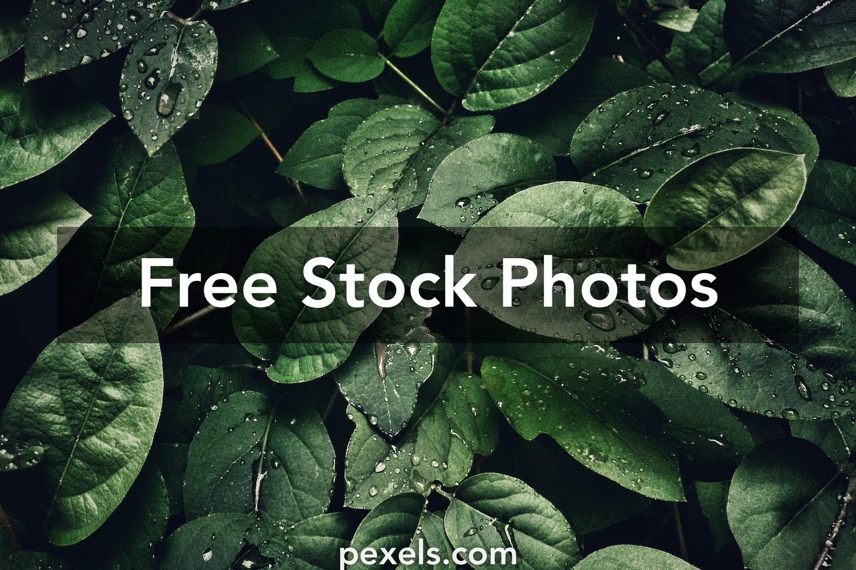 1000 Engaging Plants Photos Pexels Free Stock Photos