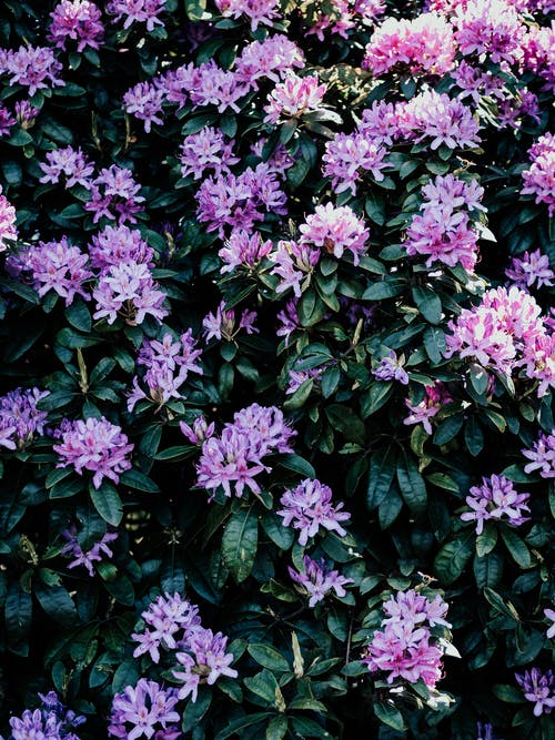 Purple Flowers With Green Leaves