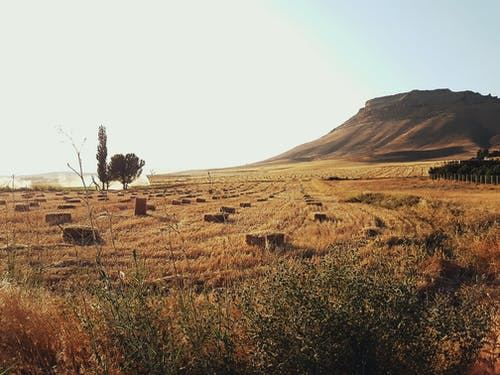 Foto d'estoc gratuïta de arbres, camp, camps de cultiu, cel
