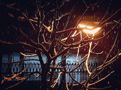 桿子, 樹, 雪 的 免费素材照片