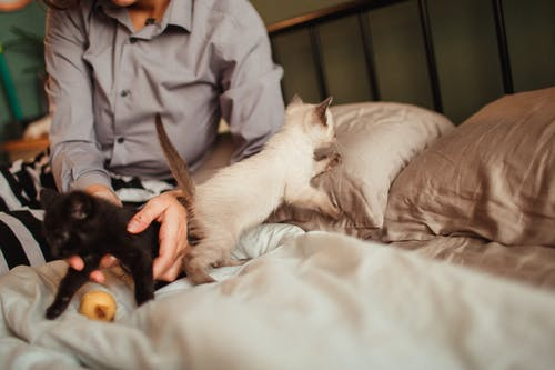 aile, Aşk, Evcil Hayvan içeren Ücretsiz stok fotoğraf