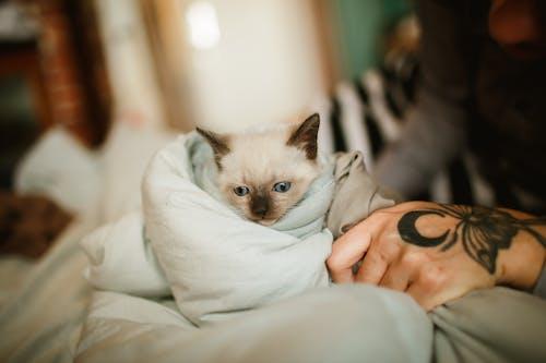 bakmak, battaniye, çok sevimli içeren Ücretsiz stok fotoğraf