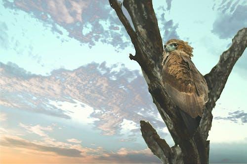 Gratis stockfoto met adelaar, beest, boom, boomtak
