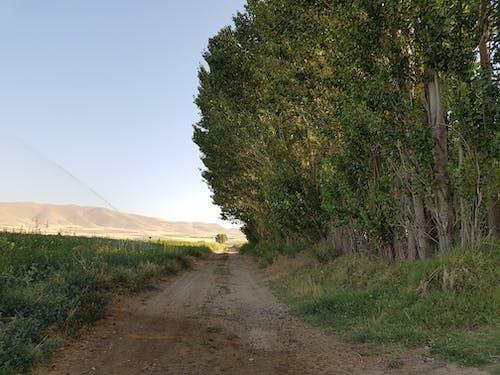 單, 樹, 路 的 免费素材照片