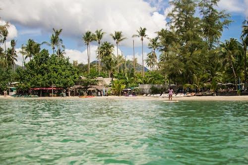 Immagine gratuita di acqua, alberi di cocco, baia