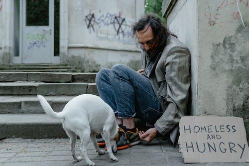 Foto stok gratis anjing, banner, di luar rumah