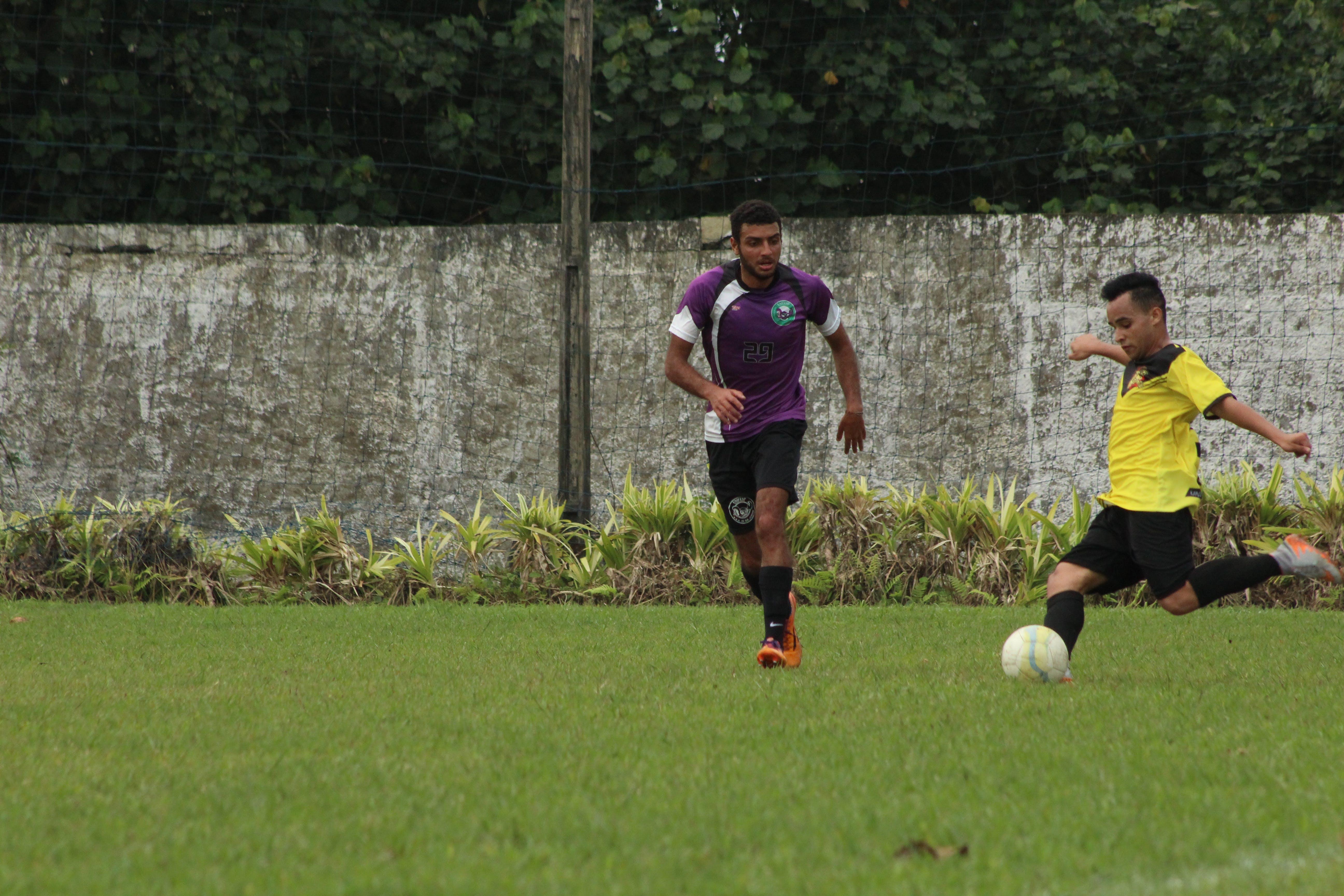 Free stock photo of purple, yellow, grass, sport
