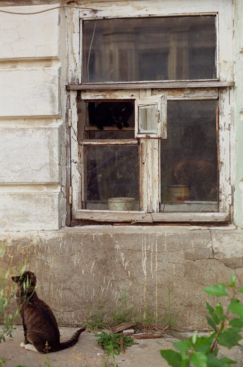 Free stock photo of 35mm, analog camera, cat, cat in the window