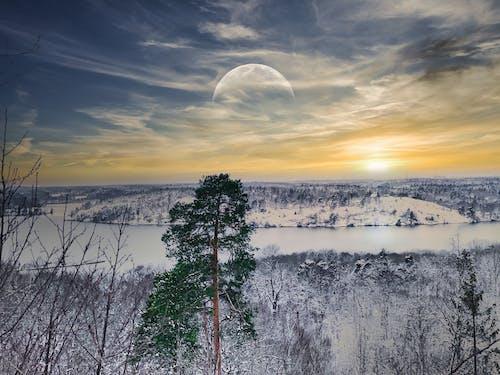 Foto profissional grátis de céu de nuvens, floresta, inverno