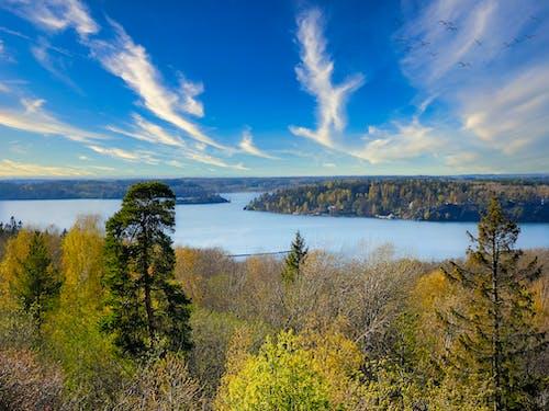 Foto profissional grátis de céu, Estocolmo, floresta