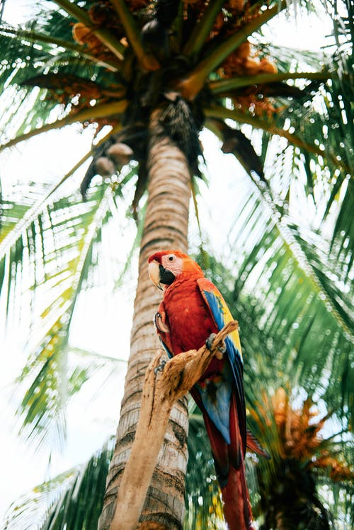 Low-Angle Shot of a Macaw Perched on a Wood