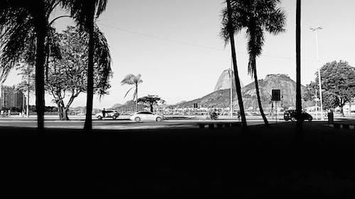 คลังภาพถ่ายฟรี ของ ขาวดำ, ต้นปาล์ม, ต้นไม้, ถนน