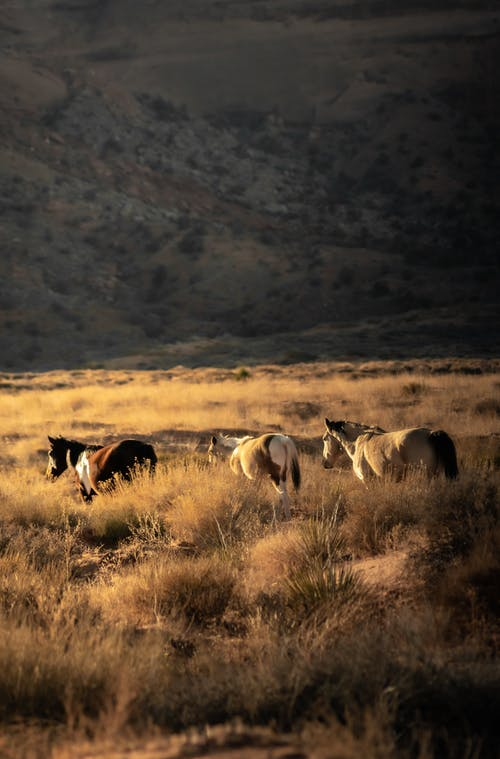 Wild horses walking on grassy field against slope of mountain in sunny day