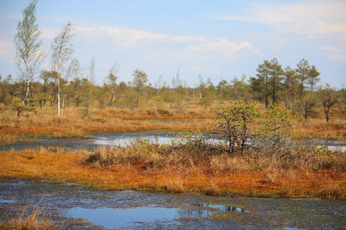 Free stock photo of bog, kemeri, latvia, marsh