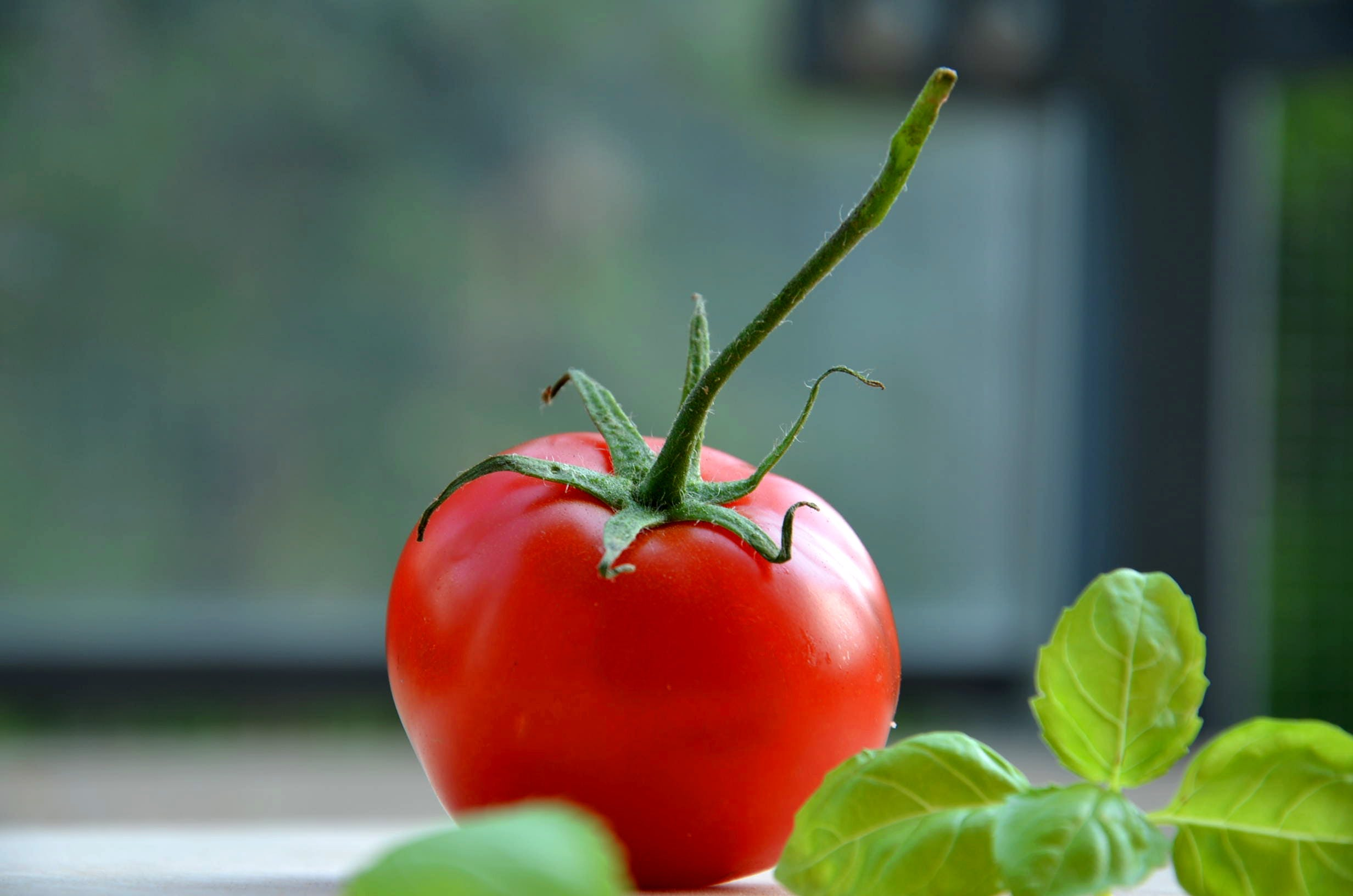 Free stock photo of tomato, vegetable, basil