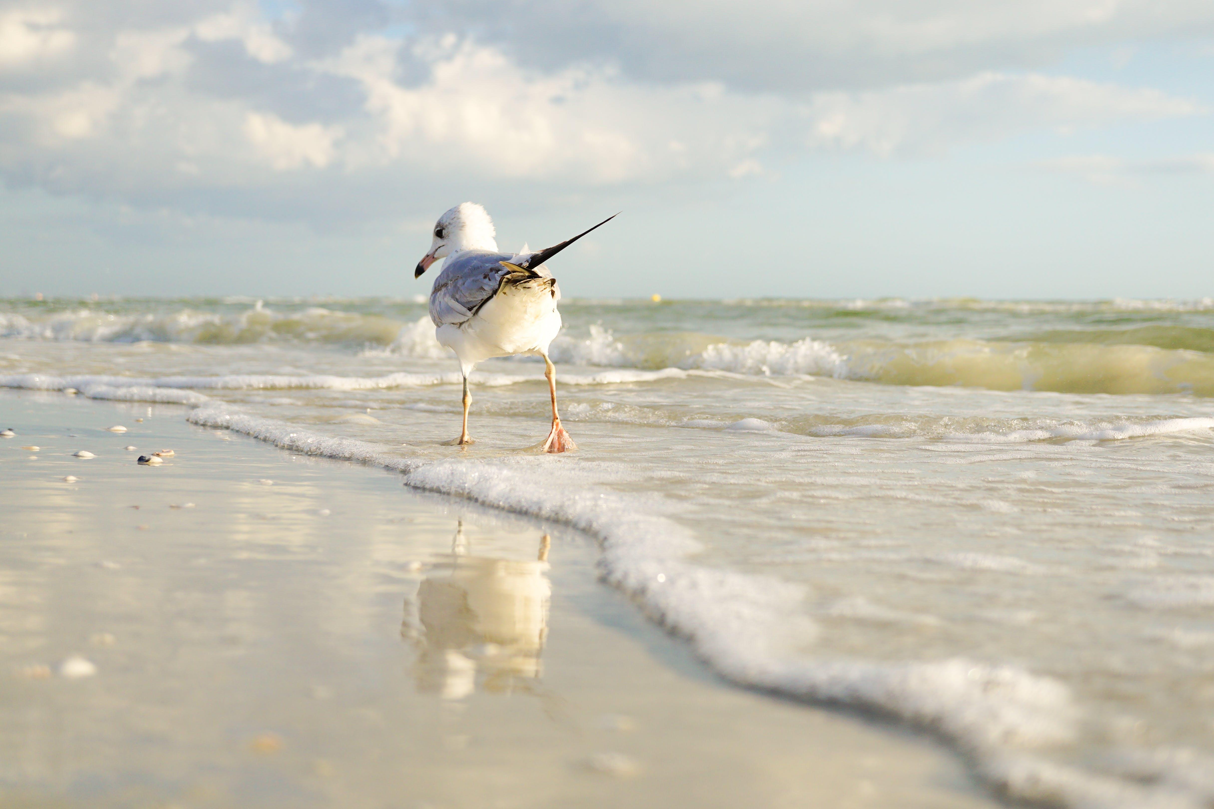 White and Gray Bird Standing on Seaside