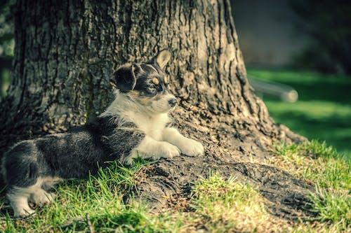 Photos gratuites de chien, chiot, chiot mignon