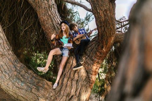 Gratis stockfoto met akoestische gitaar, boom, hout