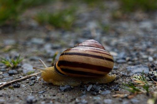 Free stock photo of body movement, garden snail, health