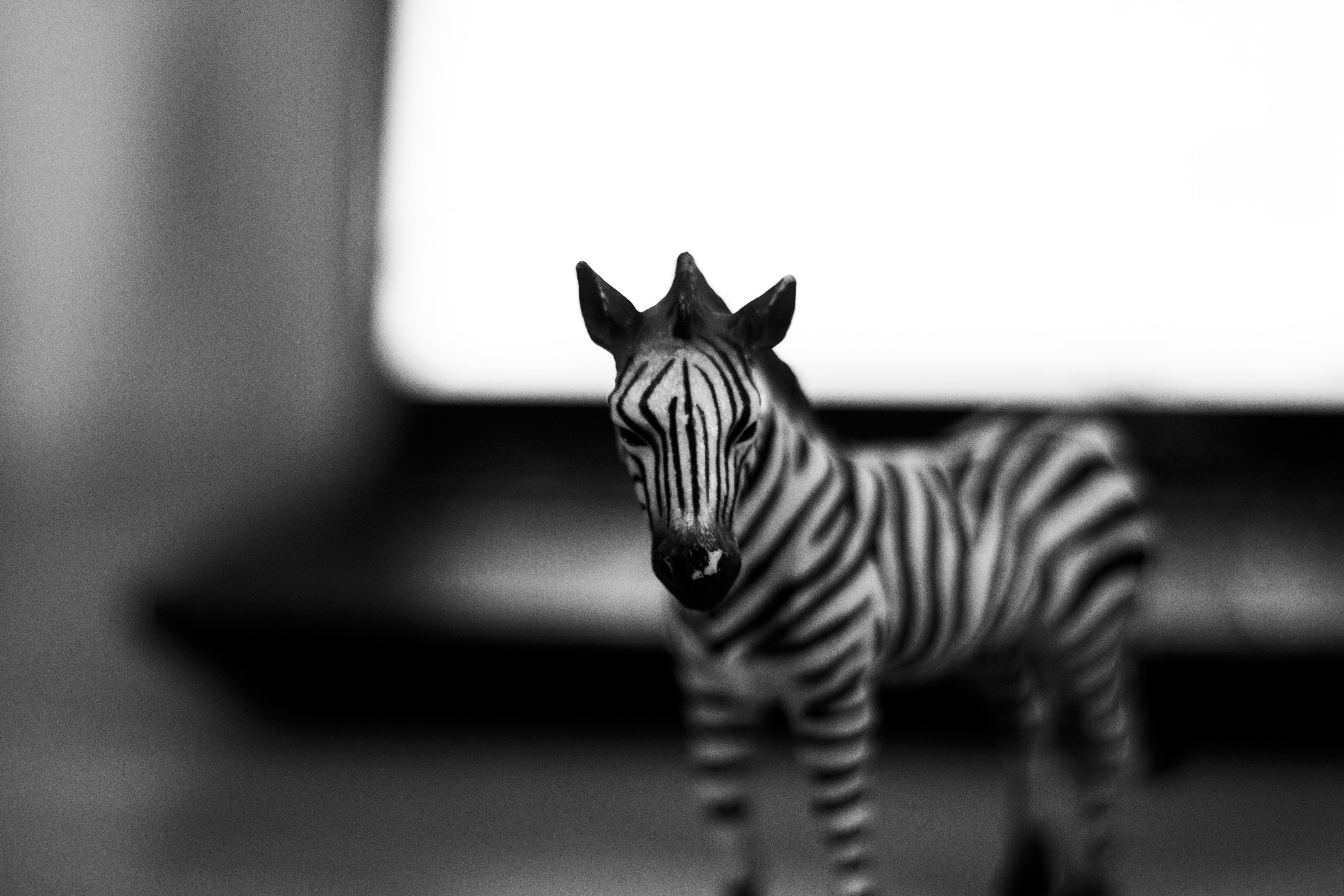 Foto stok gratis 50mm, alam, hitam dan putih, ibu Pertiwi