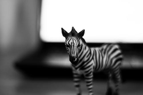 Darmowe zdjęcie z galerii z 50 mm, czarno-biały, kontrast, matka natura