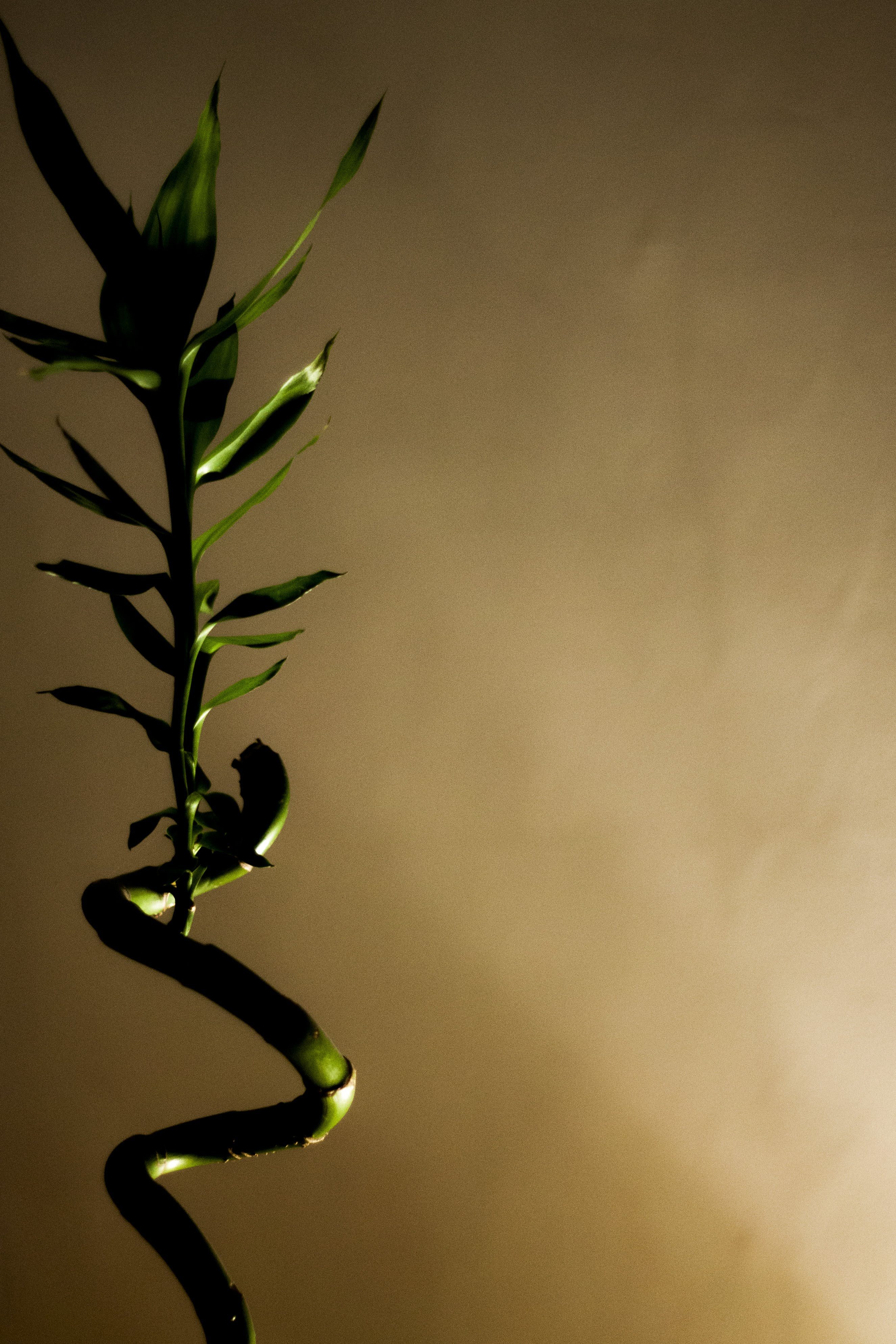 Free stock photo of bamboo, contrast, green, life