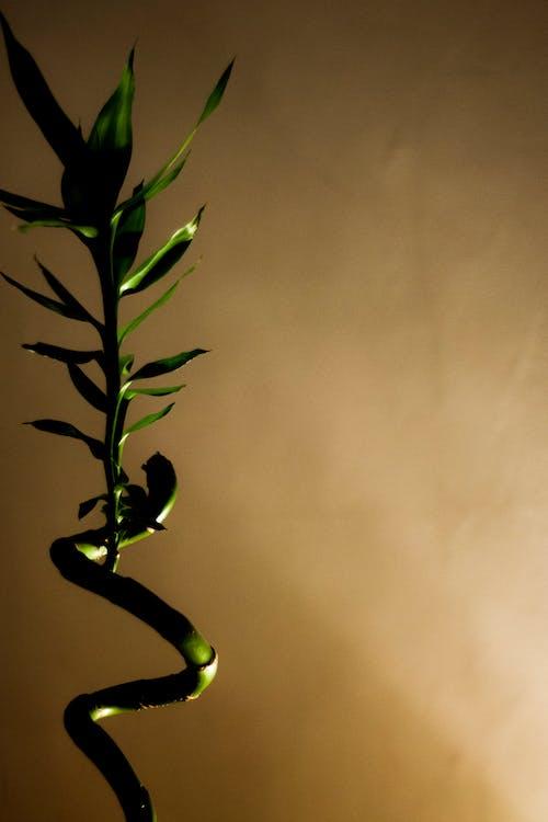 Darmowe zdjęcie z galerii z kontrast, natura, zielony, życie