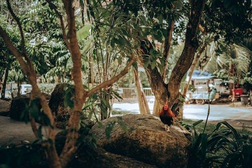 Gratis lagerfoto af dagslys, dagtimer, dyr, dyrefotografering