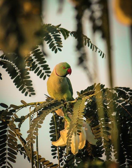 Základová fotografie zdarma na téma barva, divočina, pírko