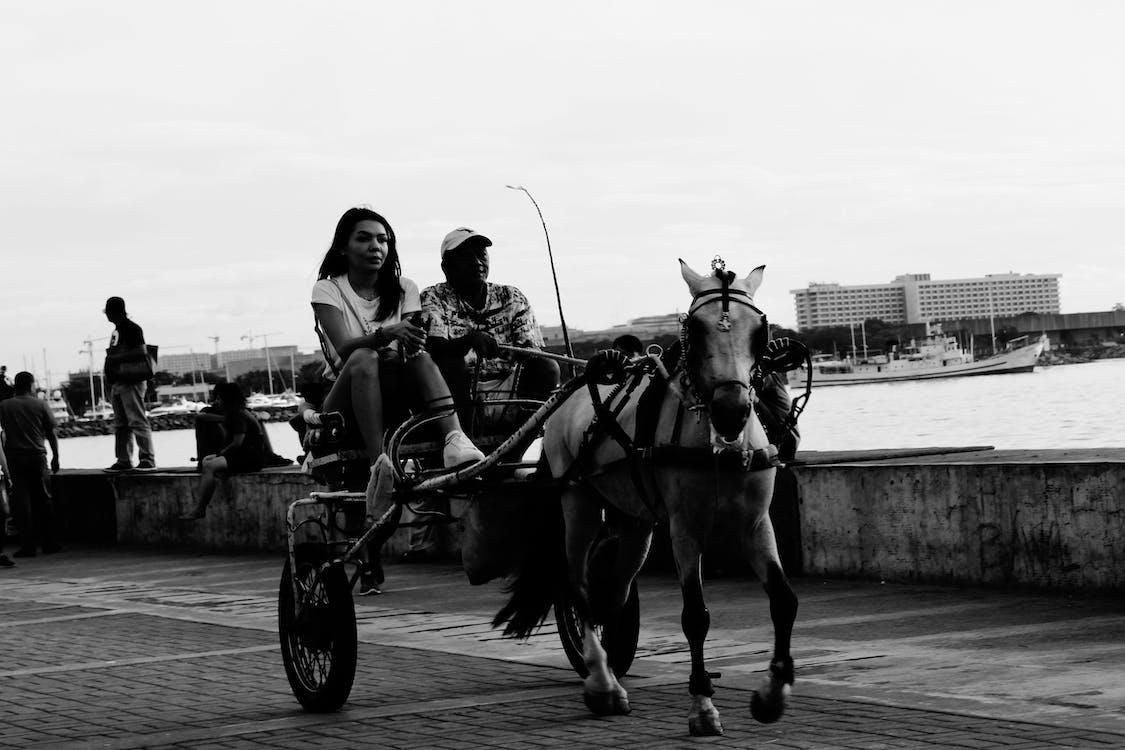 ajaminen, filippiinit, hevonen