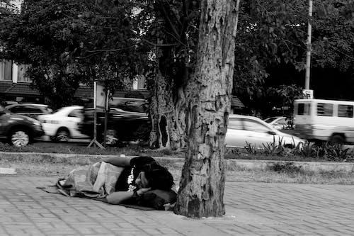 거리, 교통, 교통체계, 나무의 무료 스톡 사진