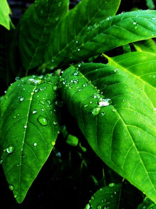 inciler, Yağmurdan sonra, yeşil içeren Ücretsiz stok fotoğraf